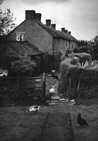 Picture of Cottages on Spaunton Moor, North Yorkshire
